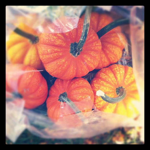 Small-orange-pumpkins-in-bag