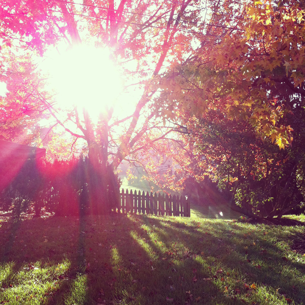 auntumn-sun-rays-gold-leaves