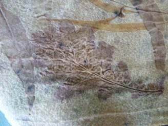 oak leaf on wool