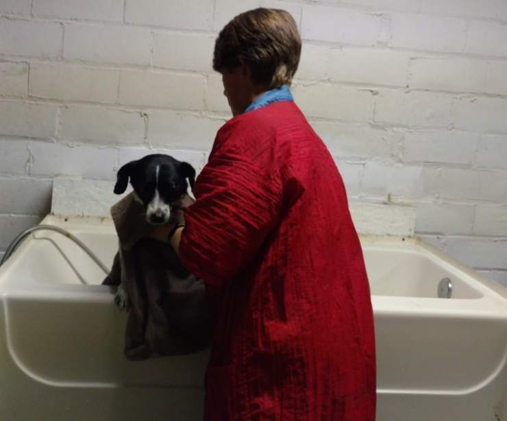 Owney Says Baths are for the Birds!