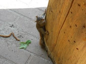 Baby Squirrel5