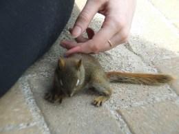 Baby Squirrel6