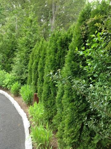 Evergreen screen
