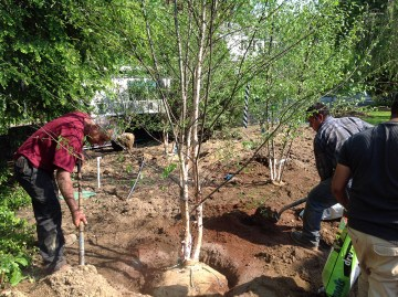 Planting trees landscape project