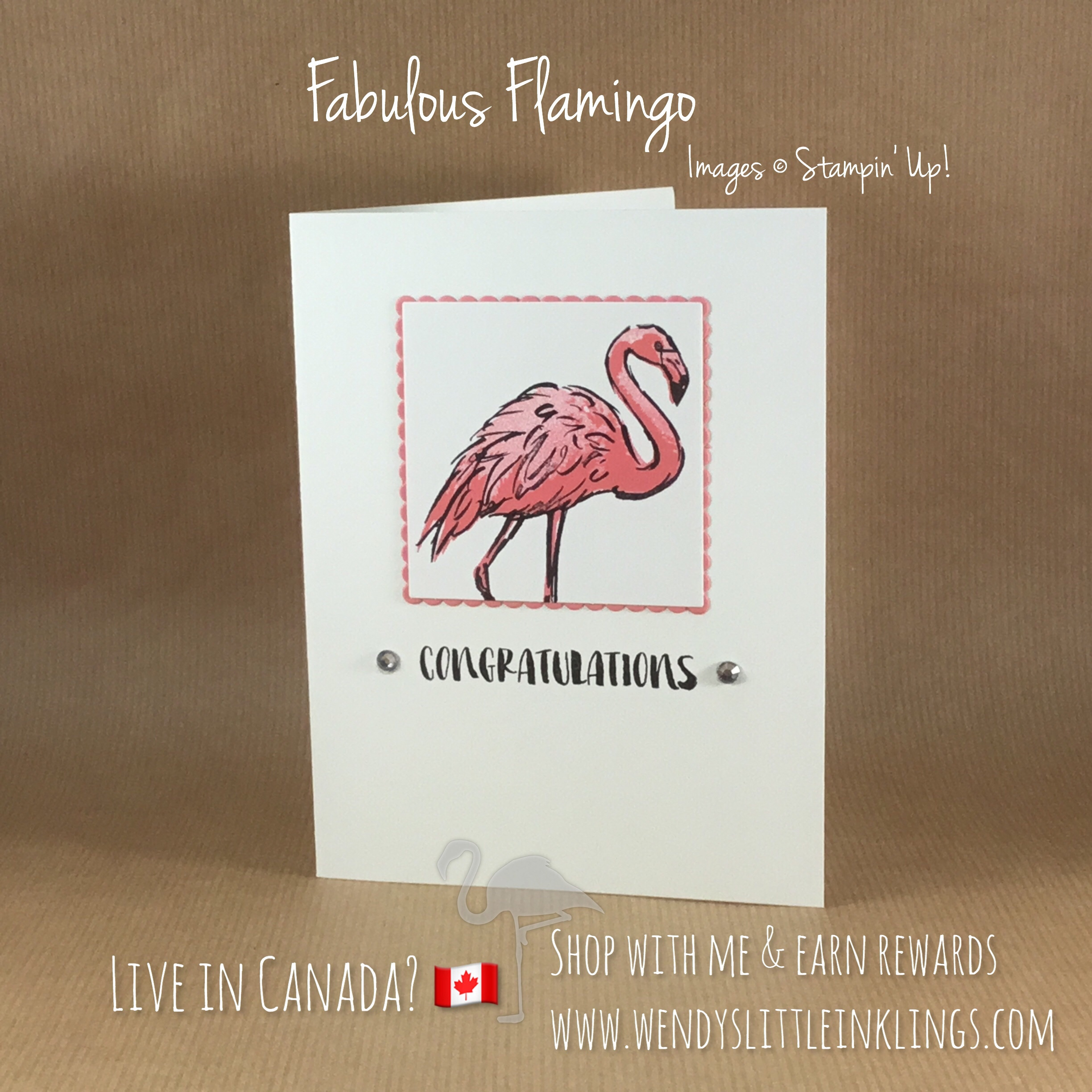 flamingo-friday-fabulous-flamingo-congratulations