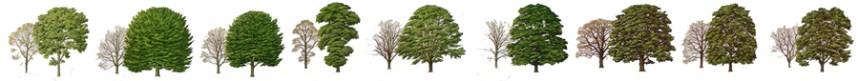 treescolour