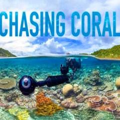 ChasingCOralbanner600_edited-1