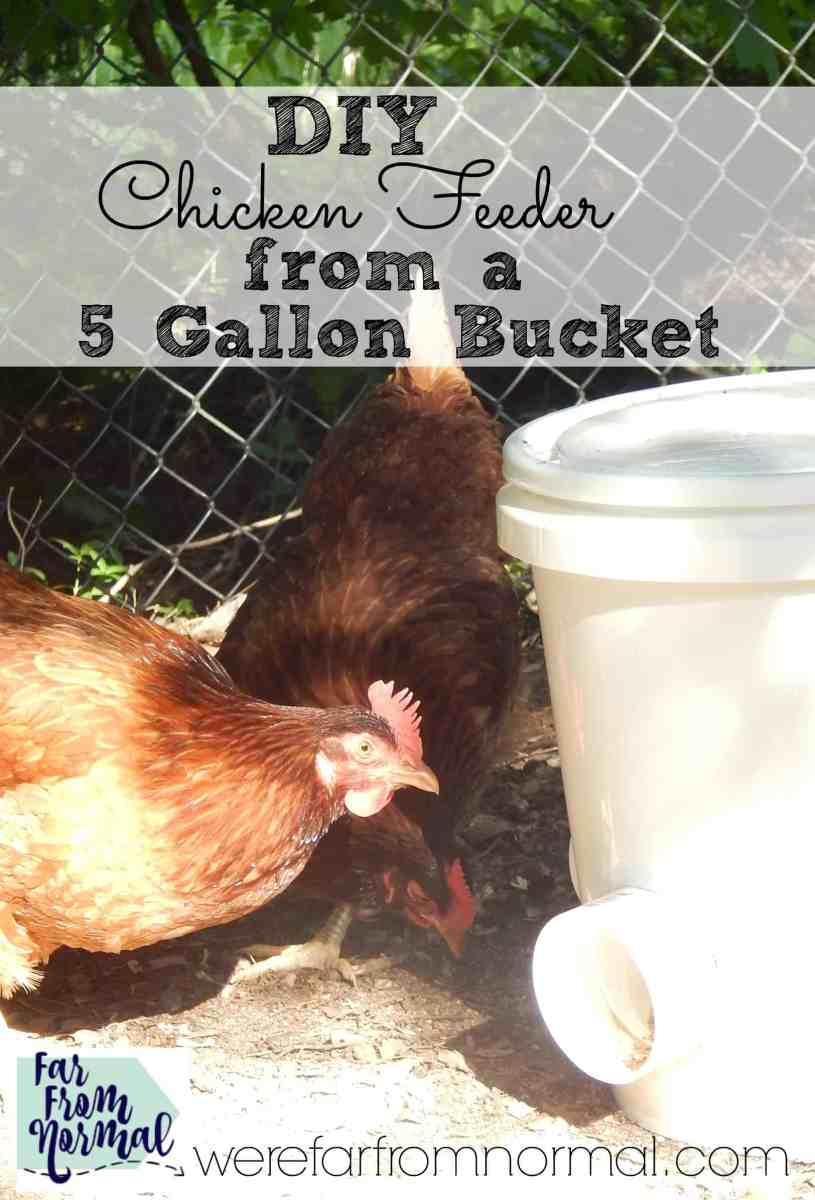 DIY Chicken Feeder (from a 5 gallon bucket!)