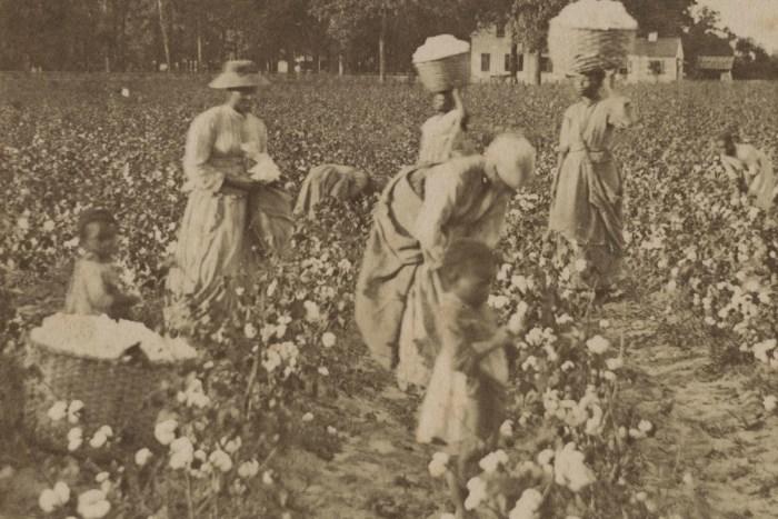 Women and Children Picking Cotton