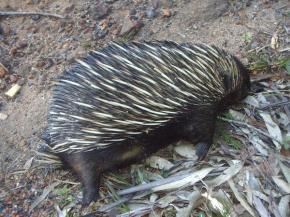 australie327