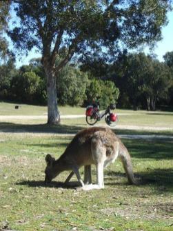 australie349