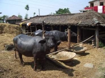 nepal003