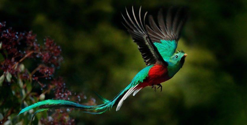 Confesión al Ave Quetzal