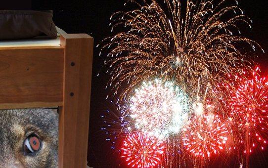 WereWatchers - Advice - Fireworks Fear
