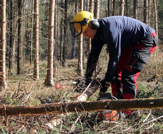 Holzaktion geht in die 2. Runde