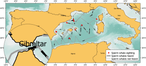 Research of IFAW on sperm whales in Strait of Gibraltar
