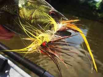Grand River Smallmouth Caught on a Streamer