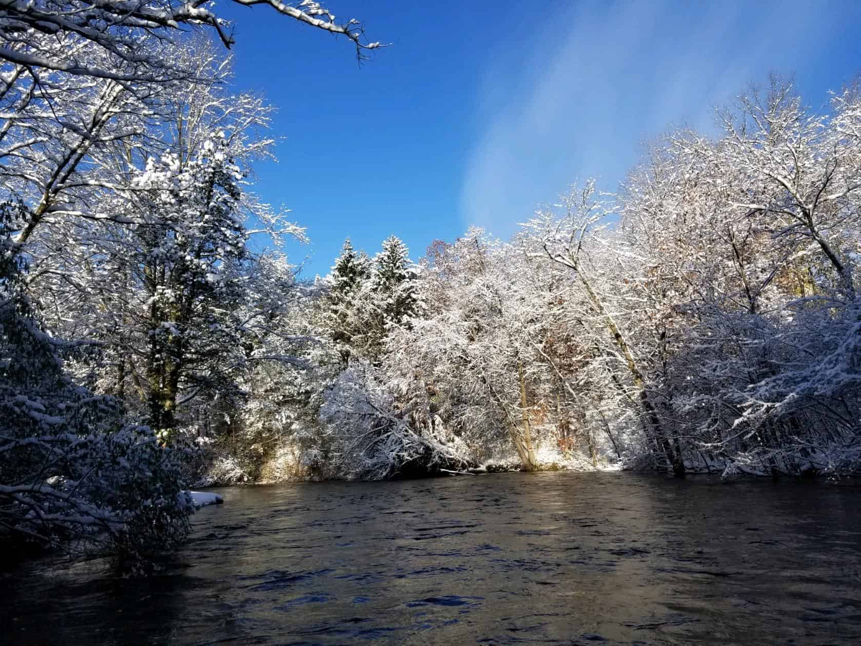 Blue sky snow covered trees on a river near Grand Rapids Michigan