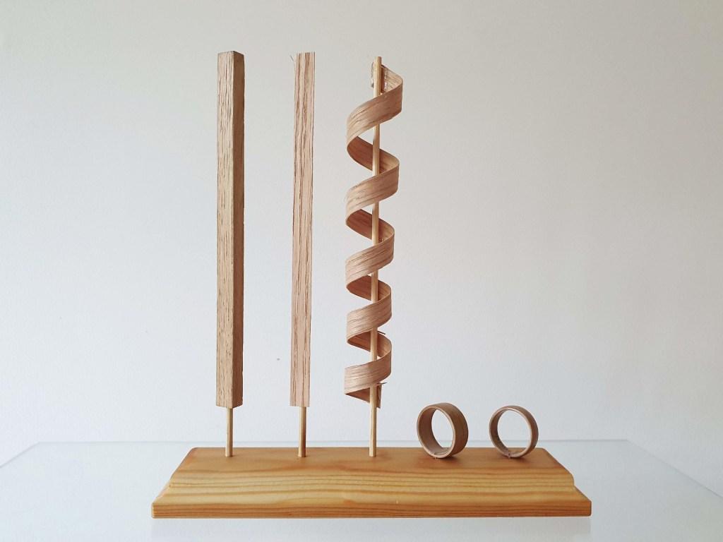 Modell für den Aufbau der Holzringe