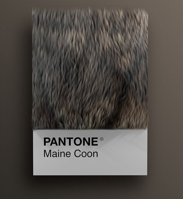 wersm-CAT-BREEDS-AS-PANTONE25