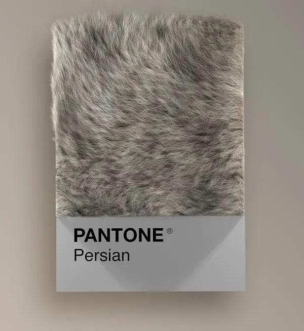 wersm-CAT-BREEDS-AS-PANTONE26