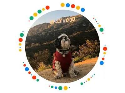 wersm-pincode-puppy