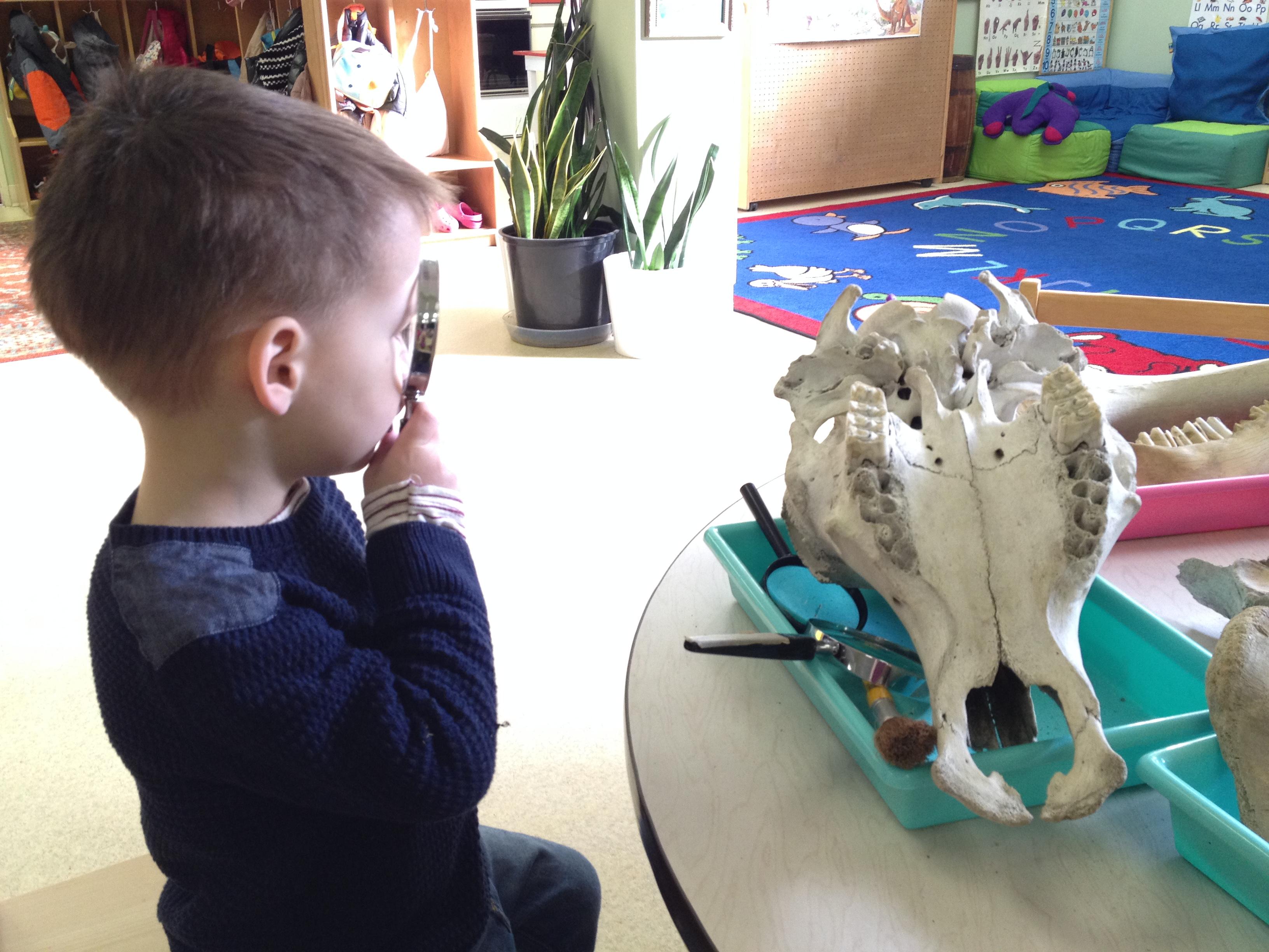 Wesbrook Preschool Dinosaur Bones