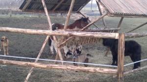 agroturystyka - posiłek zwierząt