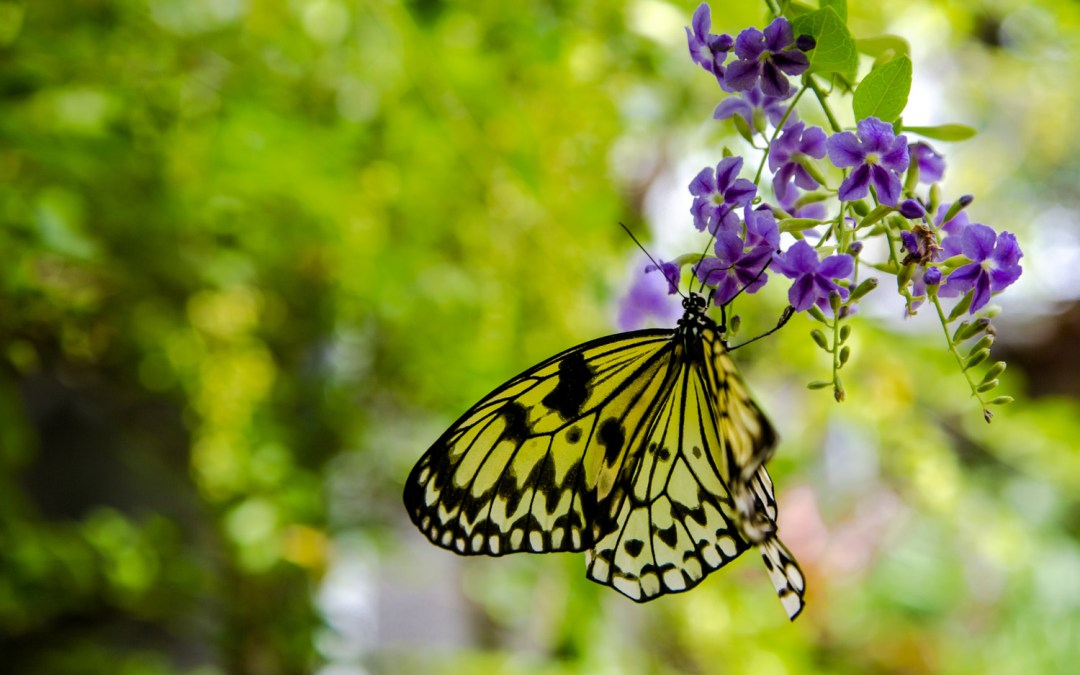 The Butterfly Gardens