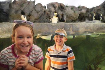 St Louis Zoo-2967