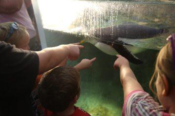 St Louis Zoo-2986