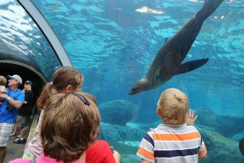 St Louis Zoo-3076