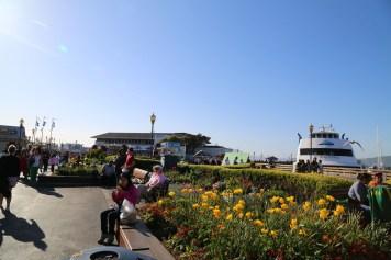 San Fran Pier 39-6941