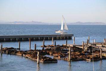San Fran Pier 39-7158