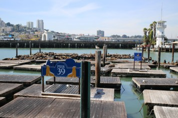 San Fran Pier 39-8082