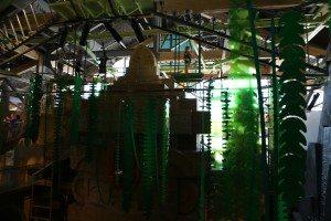 Museum of Natural Curiosity Rainforest