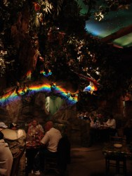 The Rainforest Cafe