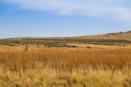 Antelope Island-0574