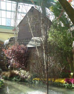 Bellagio Conservatory-05363