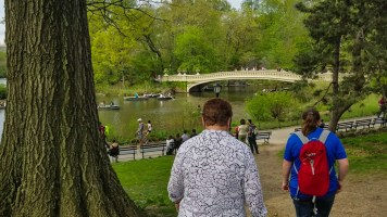 Exploring the bridges in NY Central Park