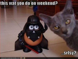 funny-pictures-is-this-what-you-do-on-the-weekend