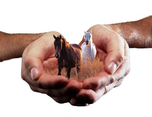 hold_your_horses_by_rachaek