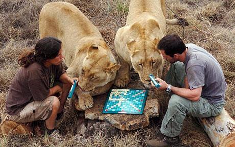 ex_scrabble_lions_1108736c