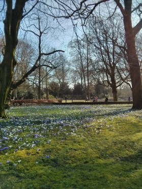 the first signs of spring in Utrecht (or: my first day of wearing shorts)