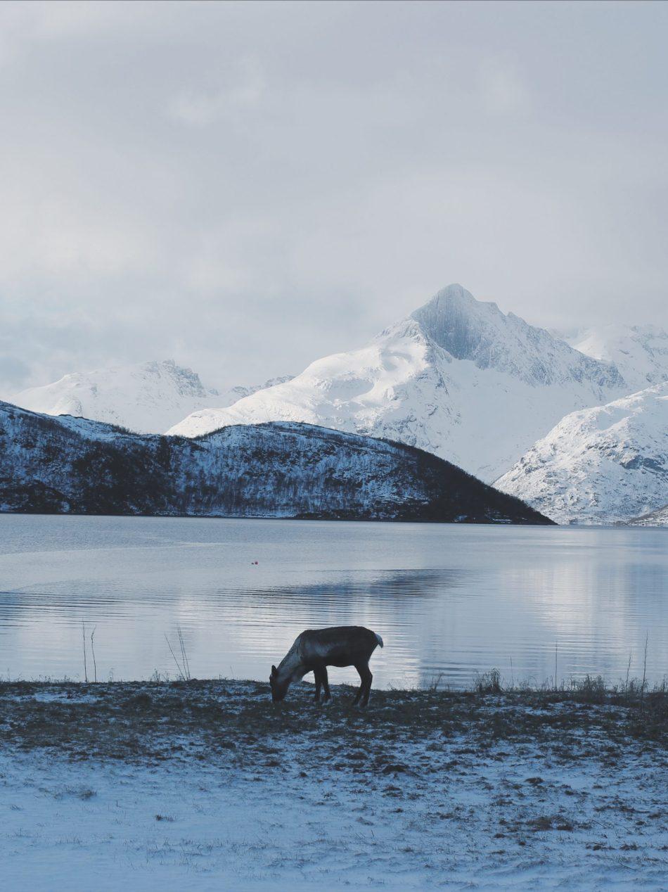 Natura Norwegia6.JPG
