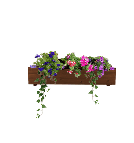 Wood Window Box with Trailing plantings