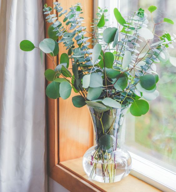 image of eucalyptus arranged in a vase on a window sill