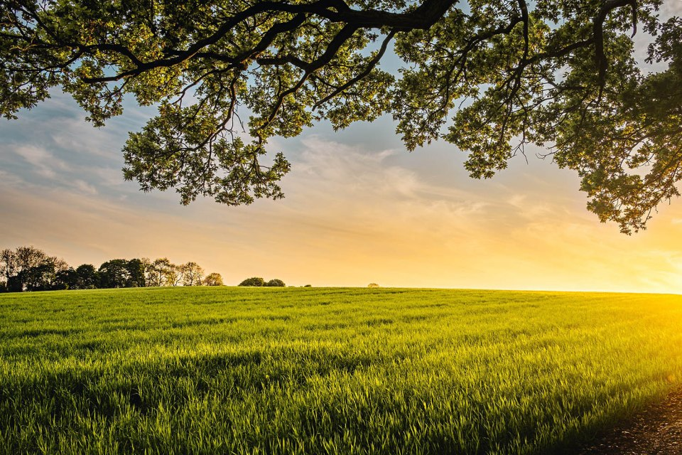 sunset over a field of grass, with a tree at the top of the frame