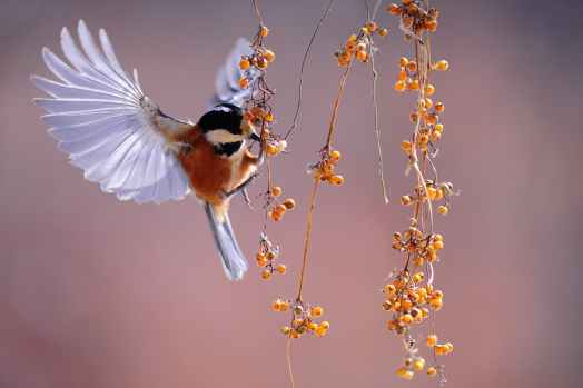 nature animal park birds
