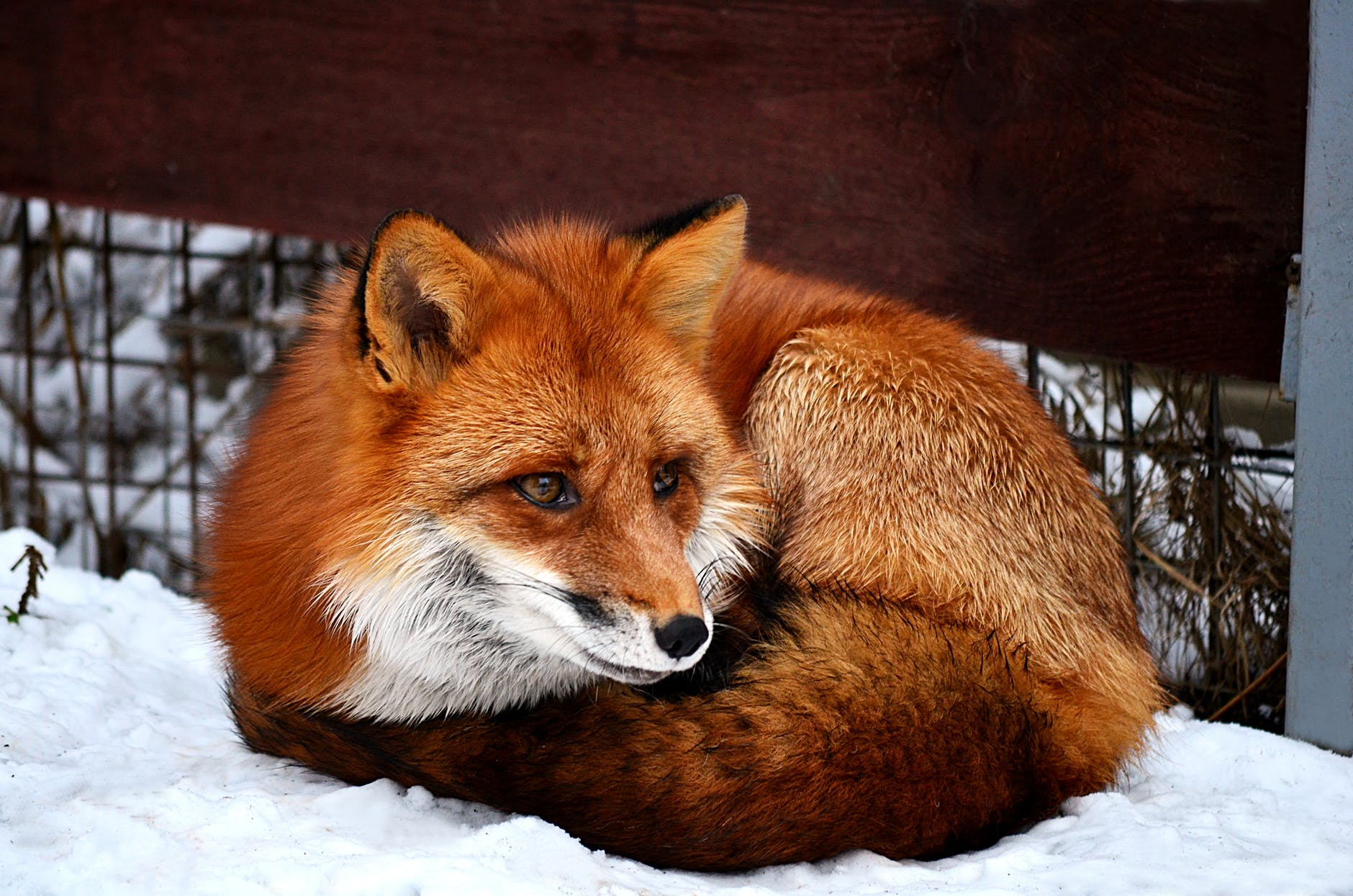 snow wood winter animal